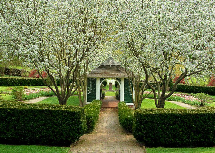 Garden Greeting Card featuring the photograph Garden In Full Bloom by Robert DeFosses
