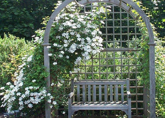 Garden Greeting Card featuring the photograph Garden Respite by Barbara McDevitt
