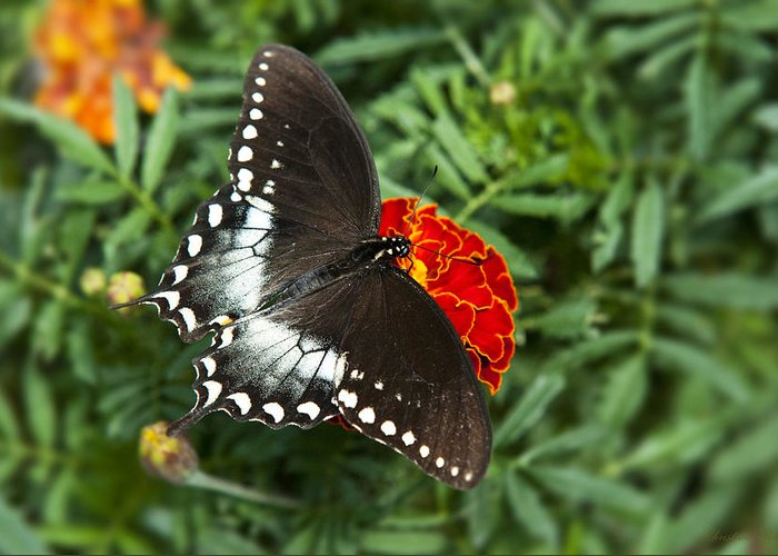 Butterfly Greeting Card featuring the photograph Garden Spice Butterfly by Christina Rollo