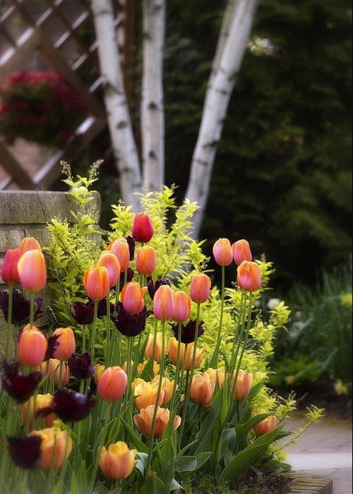 Tulips Greeting Card featuring the photograph Garden Tulips by Julie Palencia