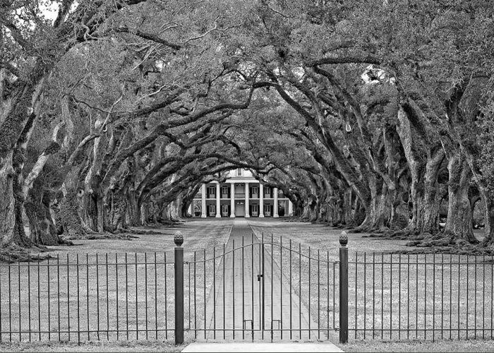 Oak Alley Plantation Greeting Card featuring the photograph Gateway To The Old South Monochrome by Steve Harrington