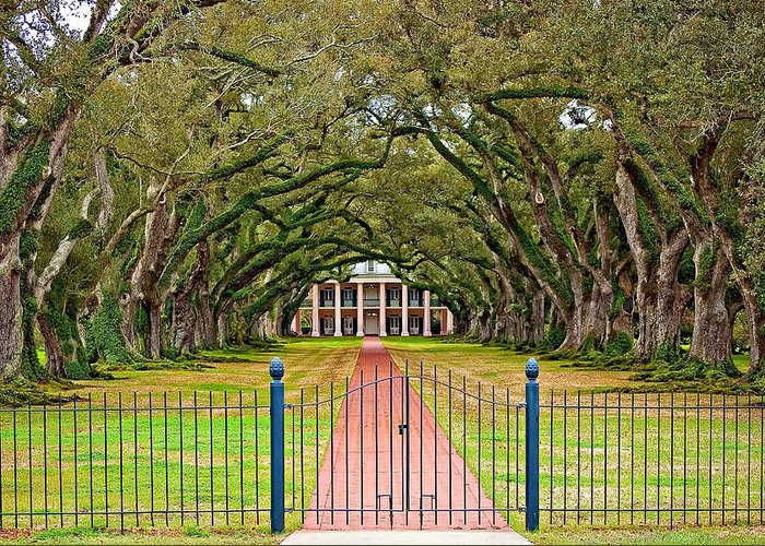 Oak Alley Plantation Greeting Card featuring the photograph Gateway To The Old South by Steve Harrington