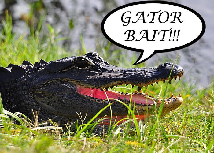 Gator Bait Greeting Card featuring the photograph Gator Bait Greeting Card by Al Powell Photography USA