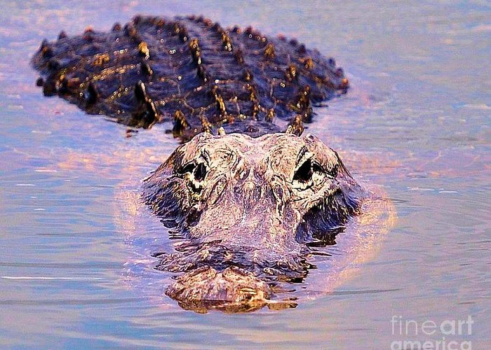 Alagator Greeting Card featuring the photograph Gator Looking by David Call