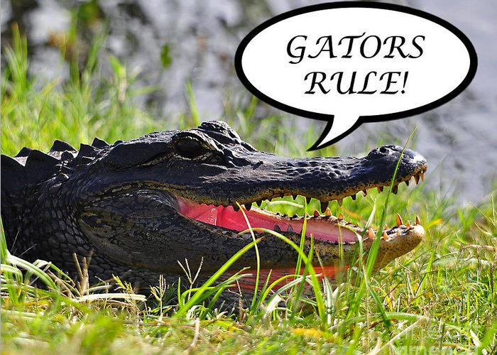 Gators Rule Greeting Card featuring the photograph Gators Rule Greeting Card by Al Powell Photography USA