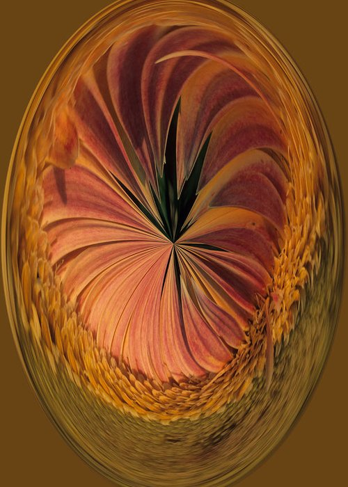 An Umber Gazania Is Depicted In An Abstract Greeting Card featuring the photograph Gazania Umber Abstract by Keith Gondron