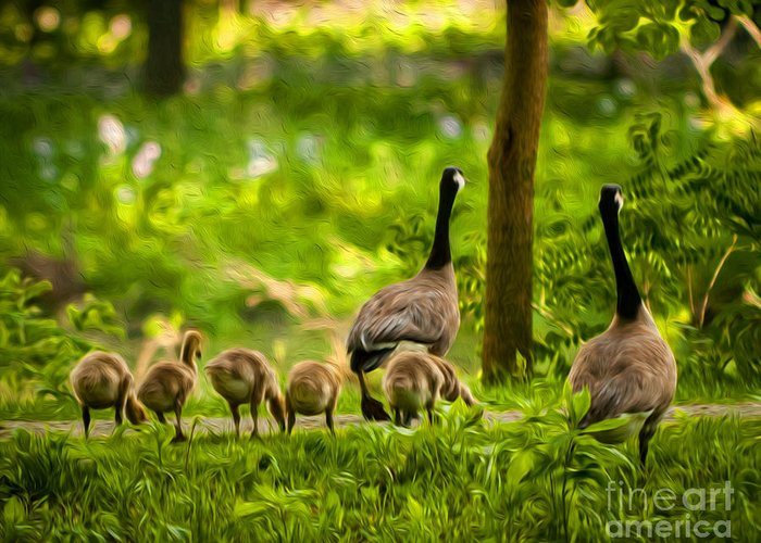 Canadian Geese Greeting Card featuring the photograph Geese Family by Michael Shake