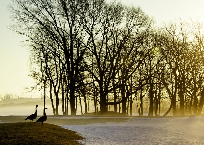 Golden Greeting Card featuring the photograph Geese Watching The Sunrise by Vicki Jauron