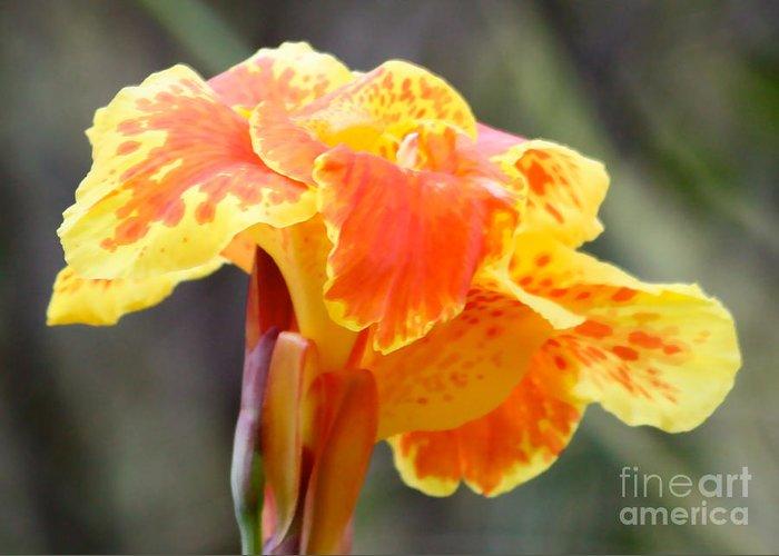 Flower Greeting Card featuring the photograph Gentle Awakening by Carol Groenen