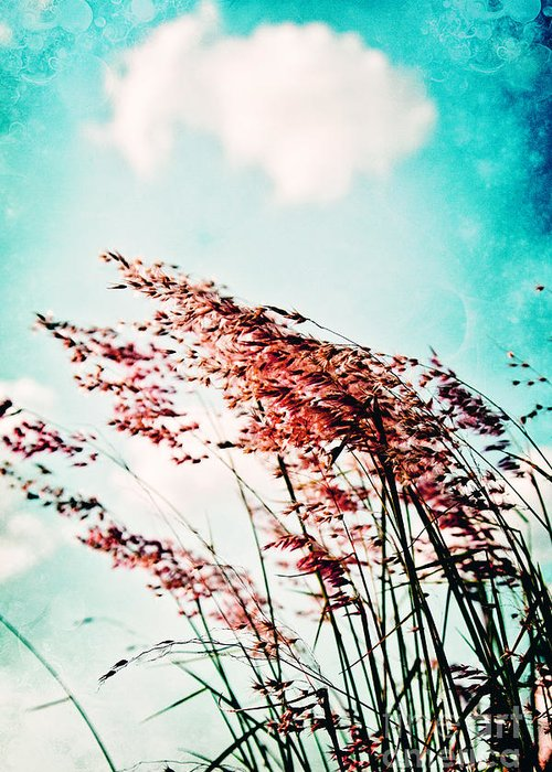 Grass Greeting Card featuring the photograph Gentle Breeze 2 by Scott Pellegrin