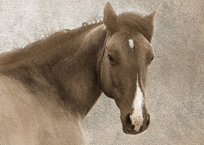 Horse Greeting Card featuring the photograph Gentle Devotion by Betty LaRue