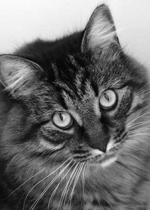 Black And White Greeting Card featuring the photograph Gentle Soul by Rhonda McDougall