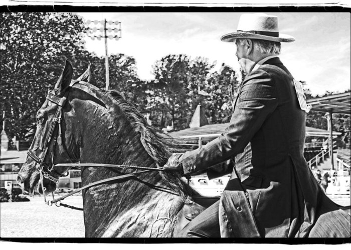 Horse Greeting Card featuring the photograph Gentleman Rider by Alice Gipson