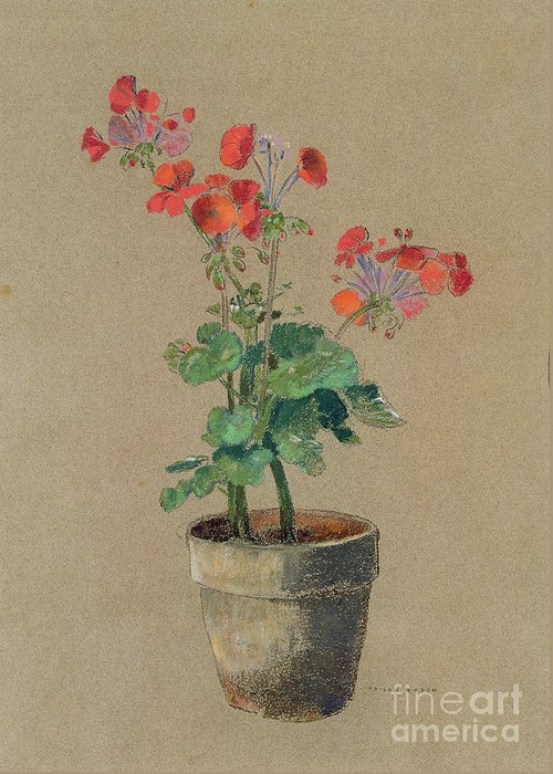 Still Life; Plant; Flowers Greeting Card featuring the painting Geraniums In A Pot by Odilon Redon