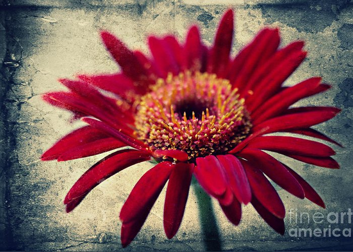 Flowers Greeting Card featuring the photograph Gerbera by Angela Doelling AD DESIGN Photo and PhotoArt