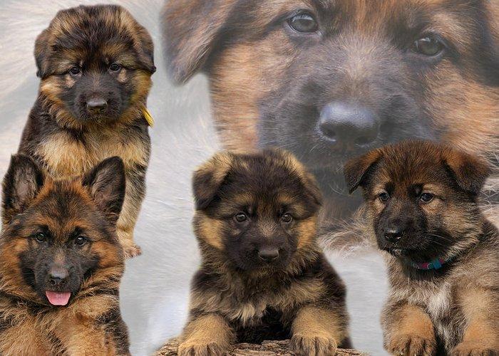 German Shepherd Puppy Greeting Card featuring the photograph German Shepherd Puppy Collage by Sandy Keeton