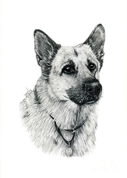 Dog Greeting Card featuring the drawing German Shepherd by Terri Mills