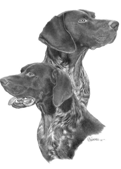 Pencil Drawing Print Greeting Card featuring the drawing German Short-hair Pointer by Joe Olivares