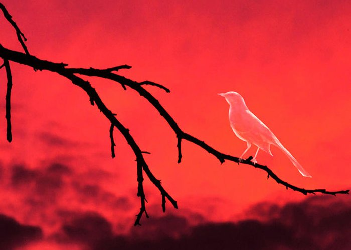 Ghost Greeting Card featuring the photograph Ghost Bird by Camille Lopez