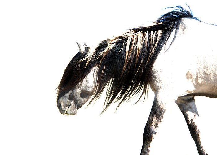 Sundowner Greeting Card featuring the photograph Ghost Horse by Lourie Zipf