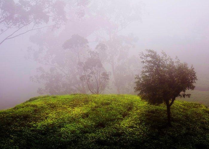 Sri Lanka Greeting Card featuring the photograph Ghost Tree In The Haunted Forest. Nuwara Eliya. Sri Lanka by Jenny Rainbow