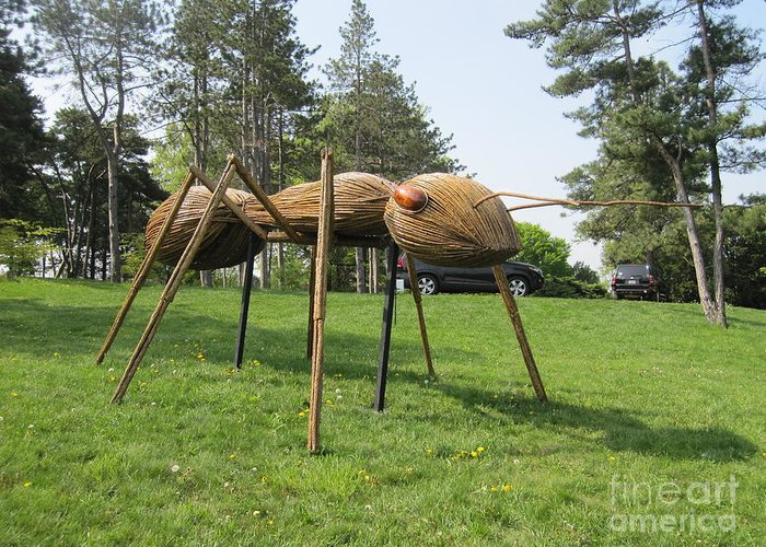 Giant Ant Greeting Card featuring the photograph Giant Ant by Terry Hunt