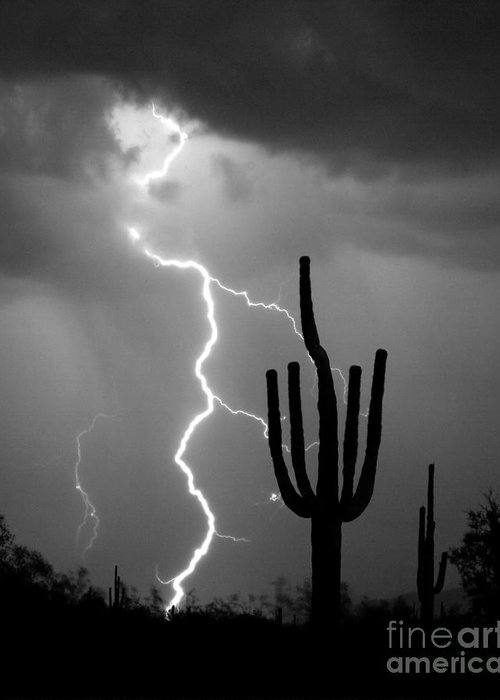Saguaro Greeting Card featuring the photograph Giant Saguaro Cactus Lightning Strike Bw by James BO Insogna