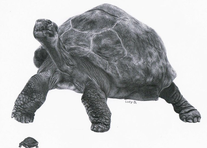 Giant Tortoise Greeting Card featuring the drawing Giant Tortoise by Lucy D