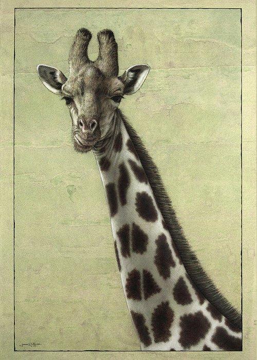 Giraffe Drawings Greeting Cards