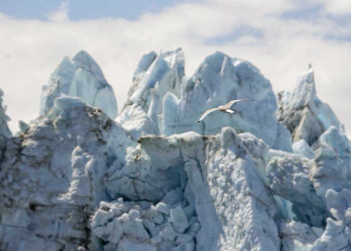 Glacier Greeting Card featuring the photograph Glacial Flight by Vicki Jauron