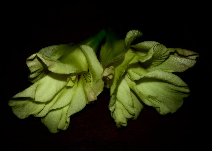 Gladiolus Greeting Card featuring the photograph Gladiolus In Shadows by Paulina Roybal