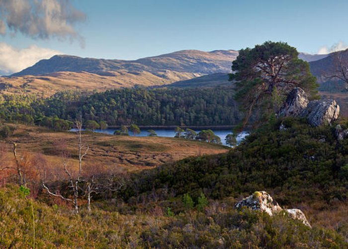 Caledonian Forest Greeting Card featuring the photograph Glen Affric Panorama II by Gary Eason