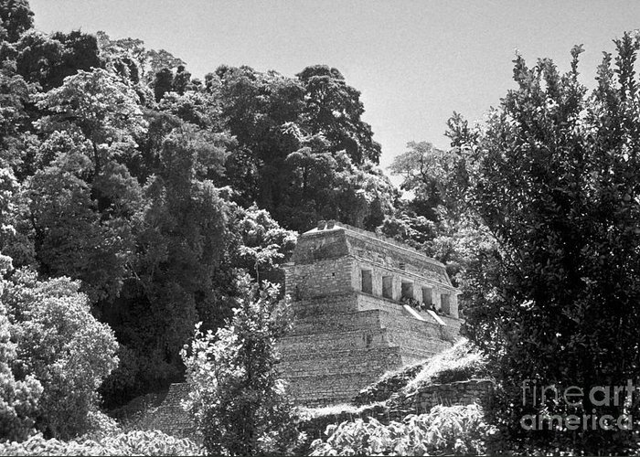 Mexico Greeting Card featuring the photograph Glowing Temple Palenque Mexcio by John Mitchell