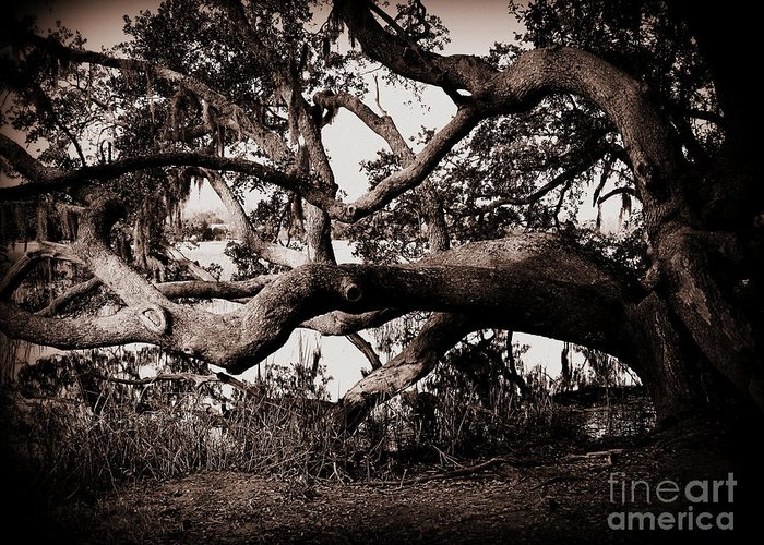 Gnarly Limbs At The Ashley River In Charleston Greeting Card featuring the photograph Gnarly Limbs At The Ashley River In Charleston by Susanne Van Hulst