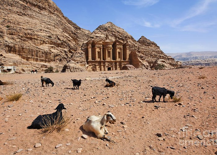 Petra Greeting Card featuring the photograph Goats In Front Of The Monastery At Petra In Jordan by Robert Preston