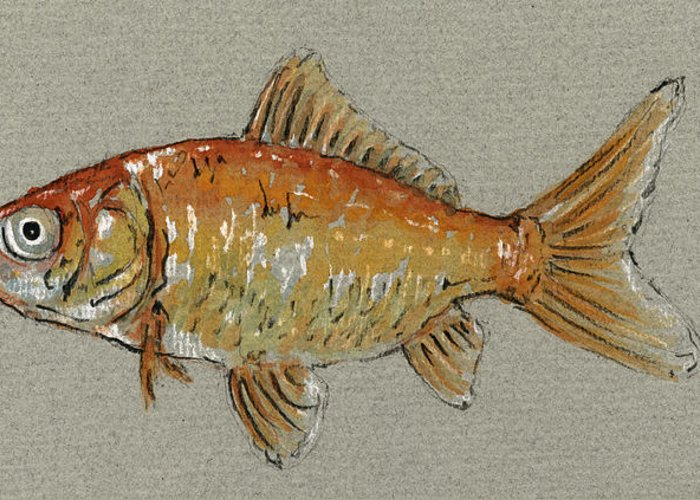 Gold Fish Paintings Greeting Cards