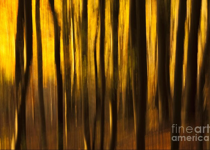 Abstract Greeting Card featuring the photograph Golden Blur by Anne Gilbert