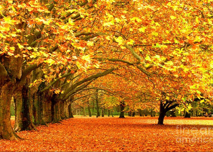 Golden Forest Greeting Card featuring the photograph Golden Forest by Boon Mee
