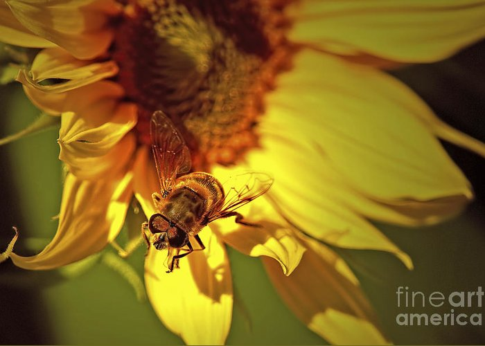 Hover Fly Greeting Card featuring the photograph Golden Hoverfly 2 by Sharon Talson
