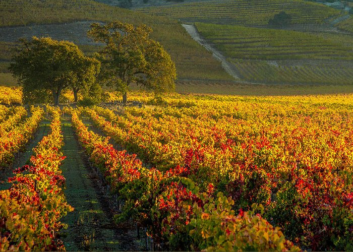 Northern California Vineyards Greeting Cards