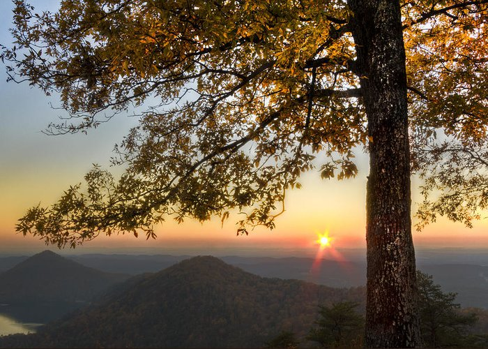 Appalachia Greeting Card featuring the photograph Golden Lights by Debra and Dave Vanderlaan