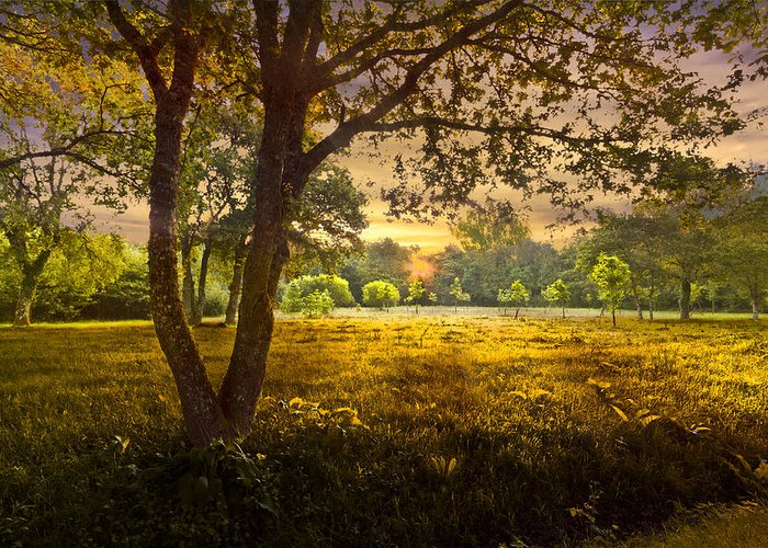 Appalachia Greeting Card featuring the photograph Golden Pastures by Debra and Dave Vanderlaan