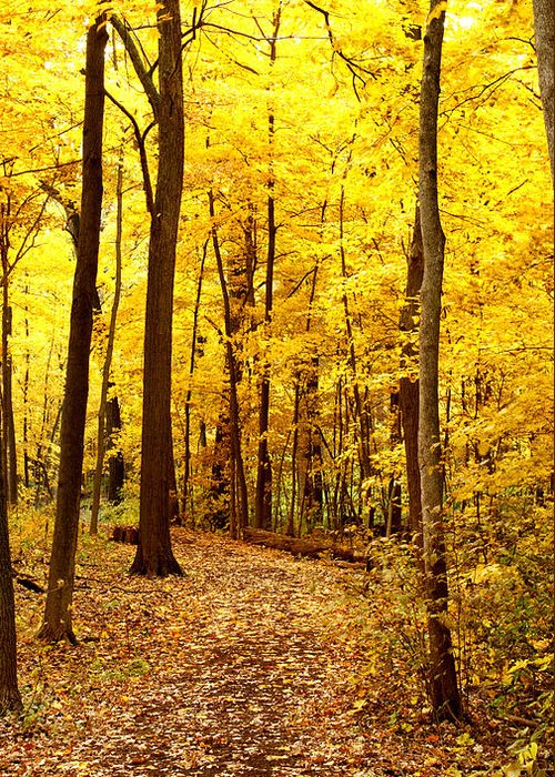 Autumn Greeting Card featuring the photograph Golden Path by Valerie Fuqua