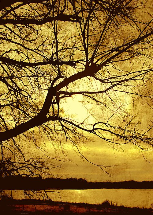 Tree Greeting Card featuring the photograph Golden Pond by Ann Powell