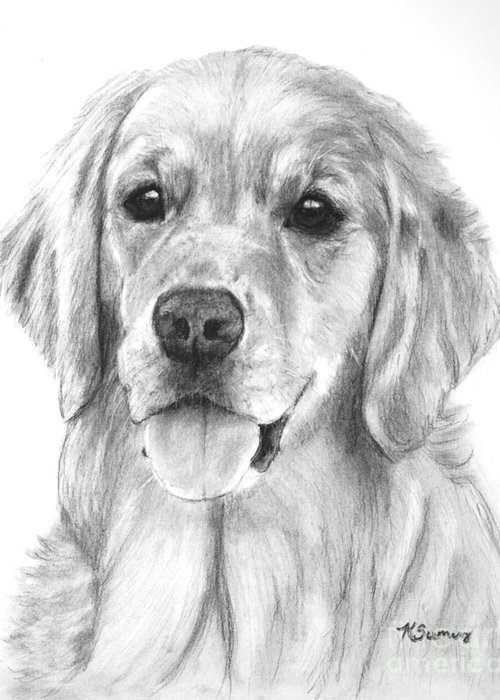 Golden Retriever Greeting Card featuring the drawing Golden Retriever Jessie Adult by Kate Sumners