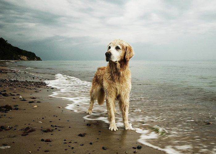 Pets Greeting Card featuring the photograph Golden Retriever On Beach by Jutta Bauer