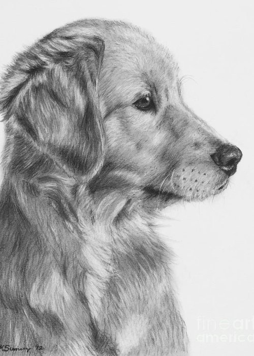 Golden Retriever Greeting Card featuring the drawing Golden Retriever Puppy In Charcoal One by Kate Sumners