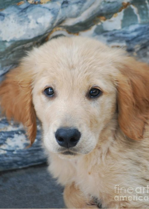 Dog Greeting Card featuring the photograph Golden Retriever Puppy by Rames Ratyantarakor