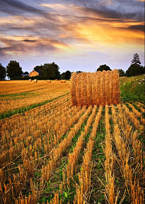 Farm Greeting Card featuring the photograph Golden Sunset Over Farm Field In Ontario by Elena Elisseeva