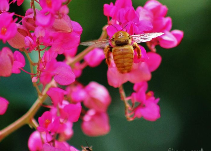 Golden Bee Greeting Card featuring the photograph Golden Visitor by Craig Wood